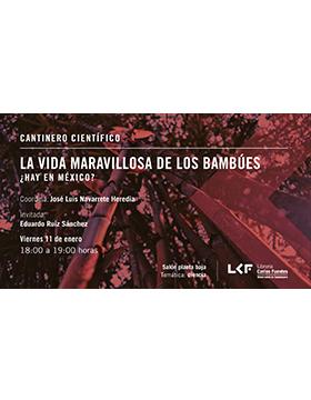 Cartel informativo sobre Cantinero científico: La vida maravillosa de los bambúes ¿Hay en México?, el 11 de enero, a las 18:00 h. en el Salón planta baja, Librería Carlos Fuentes