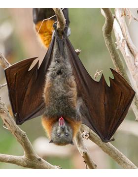 Taller: Estudio y monitoreo acústico de los murciélagos mexicanos a llevarse a cabo del 13 al 17 de febrero.