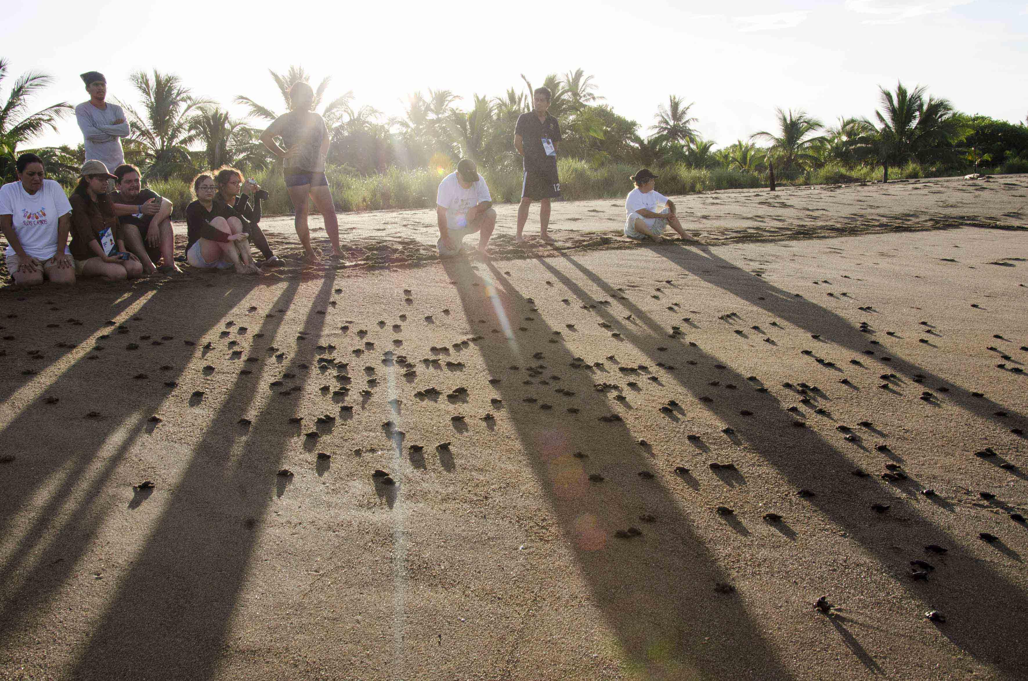 Personas en la liberación de tortugas