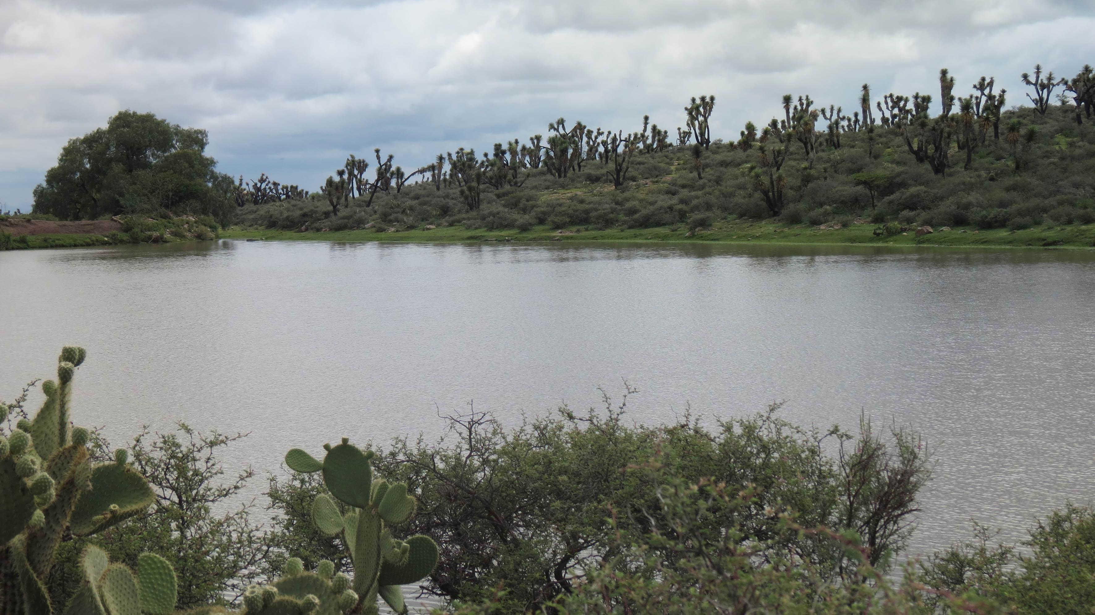 Orilla de laguna