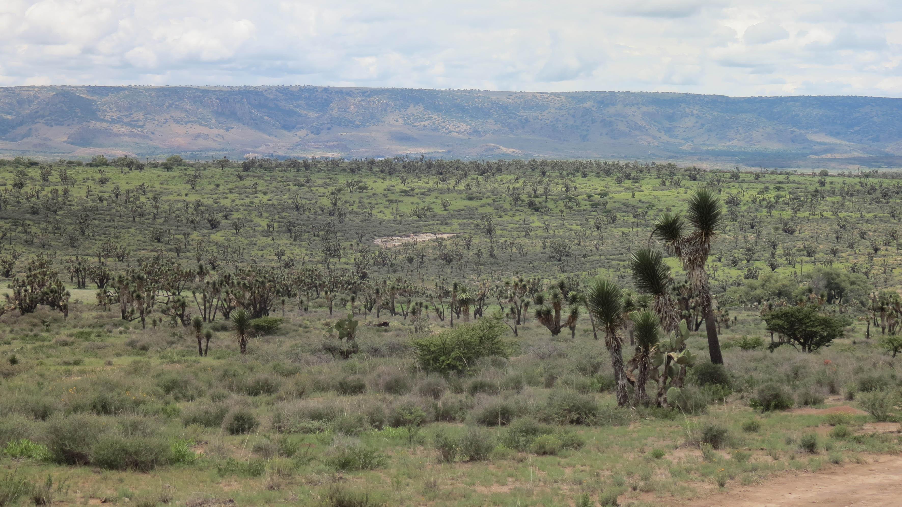 Pie de cerro con un paisaje verde