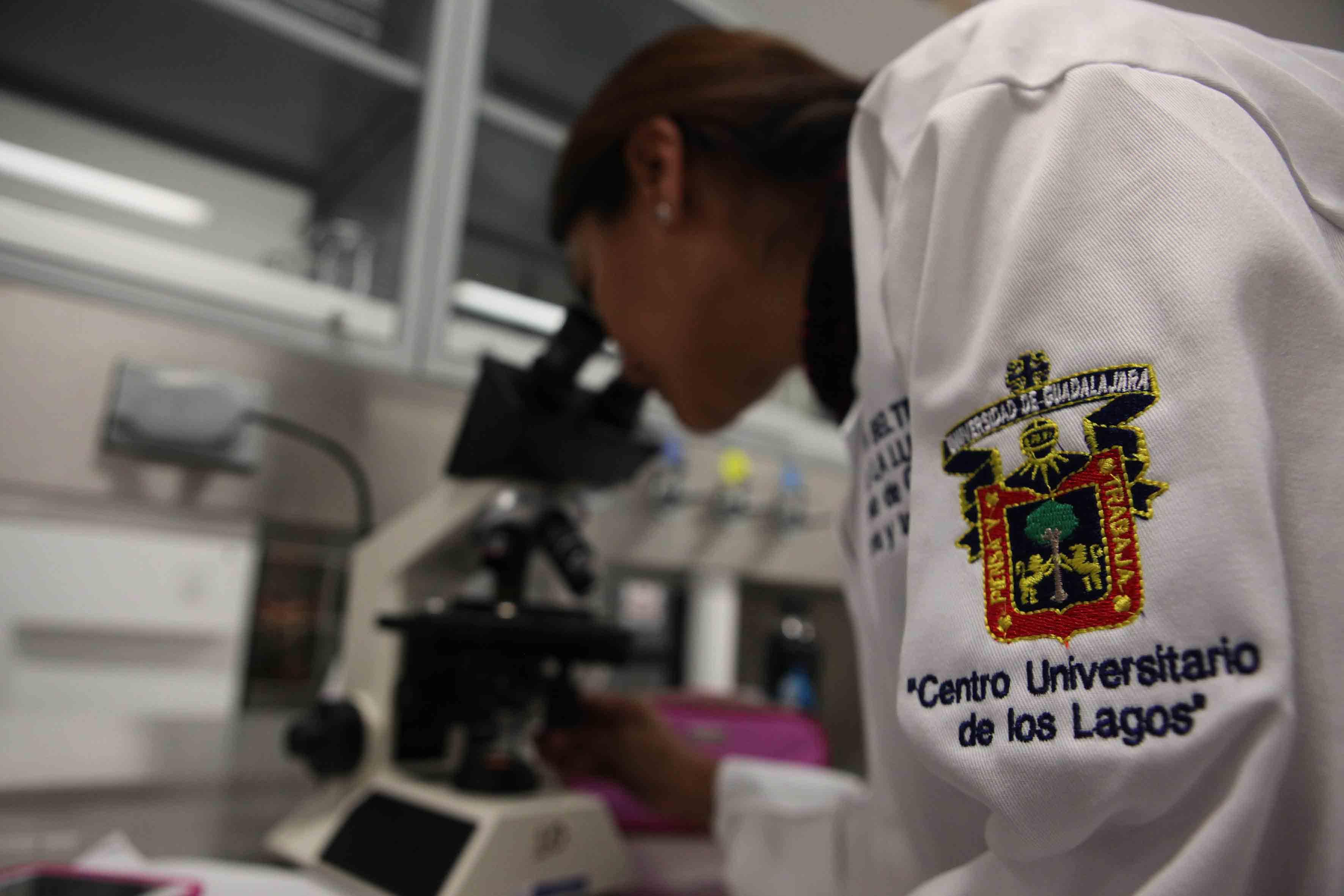 Investigador de CULagos, trabajando en laboratorio