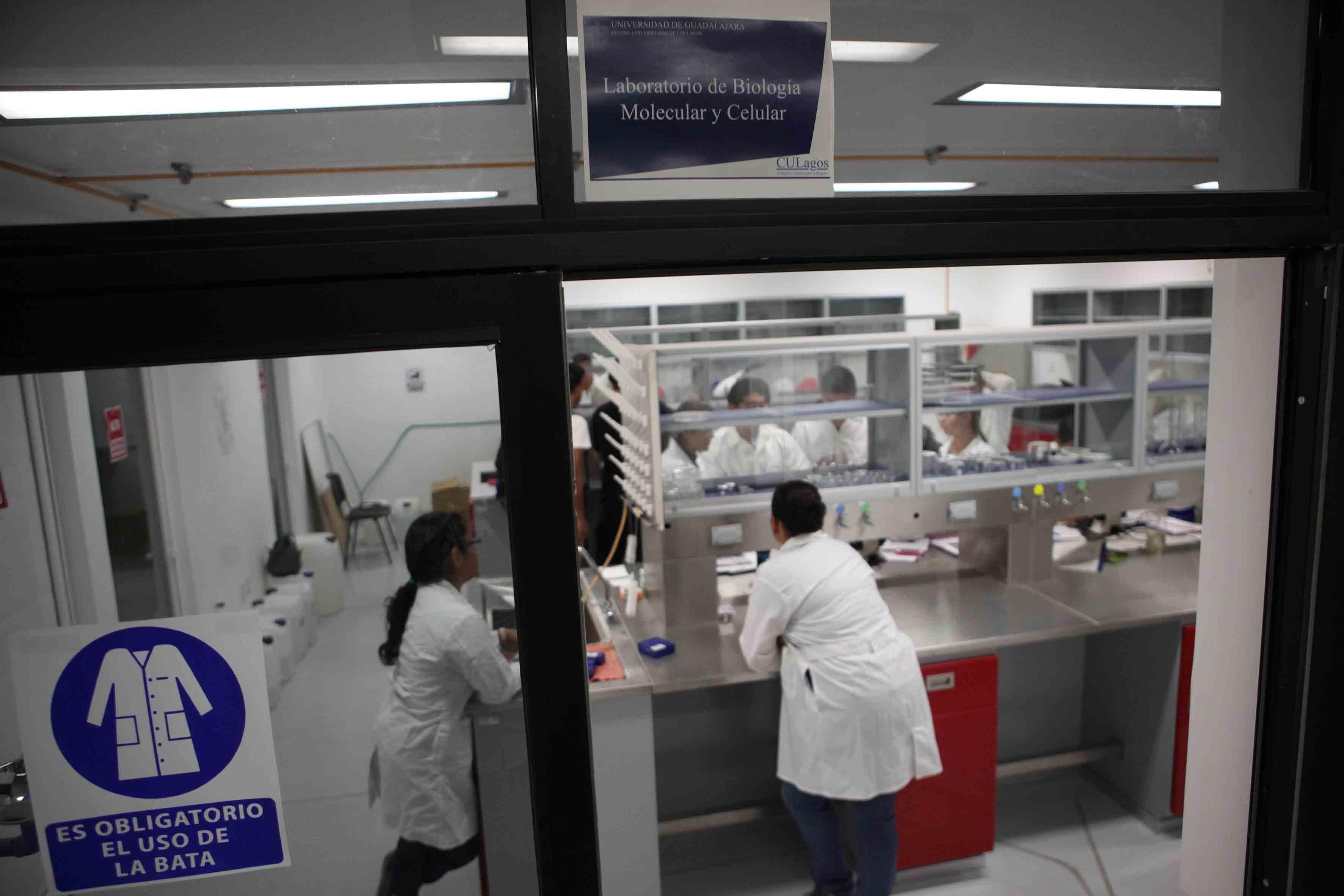 Investigadores de CULagos, trabajando en laboratorio