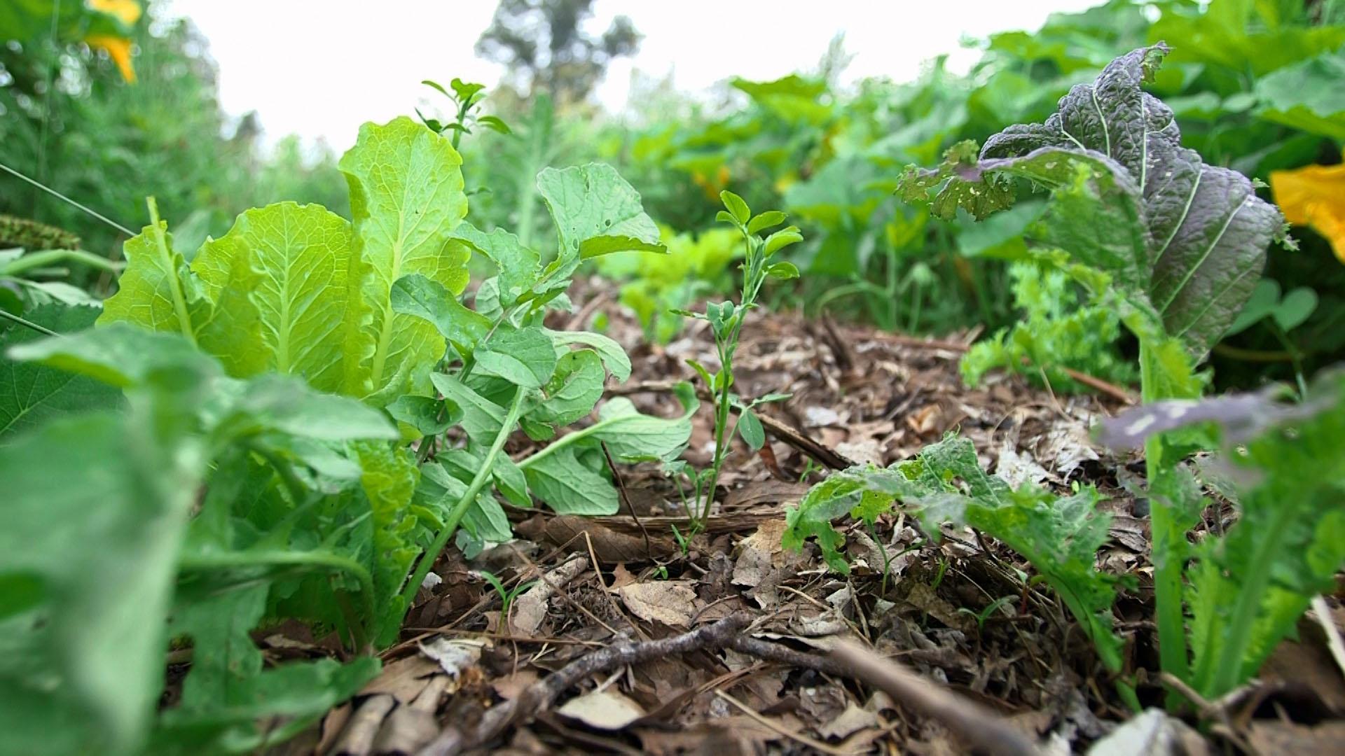 Hojarasca y zacate, residuos del campo que enriquecen la tierra