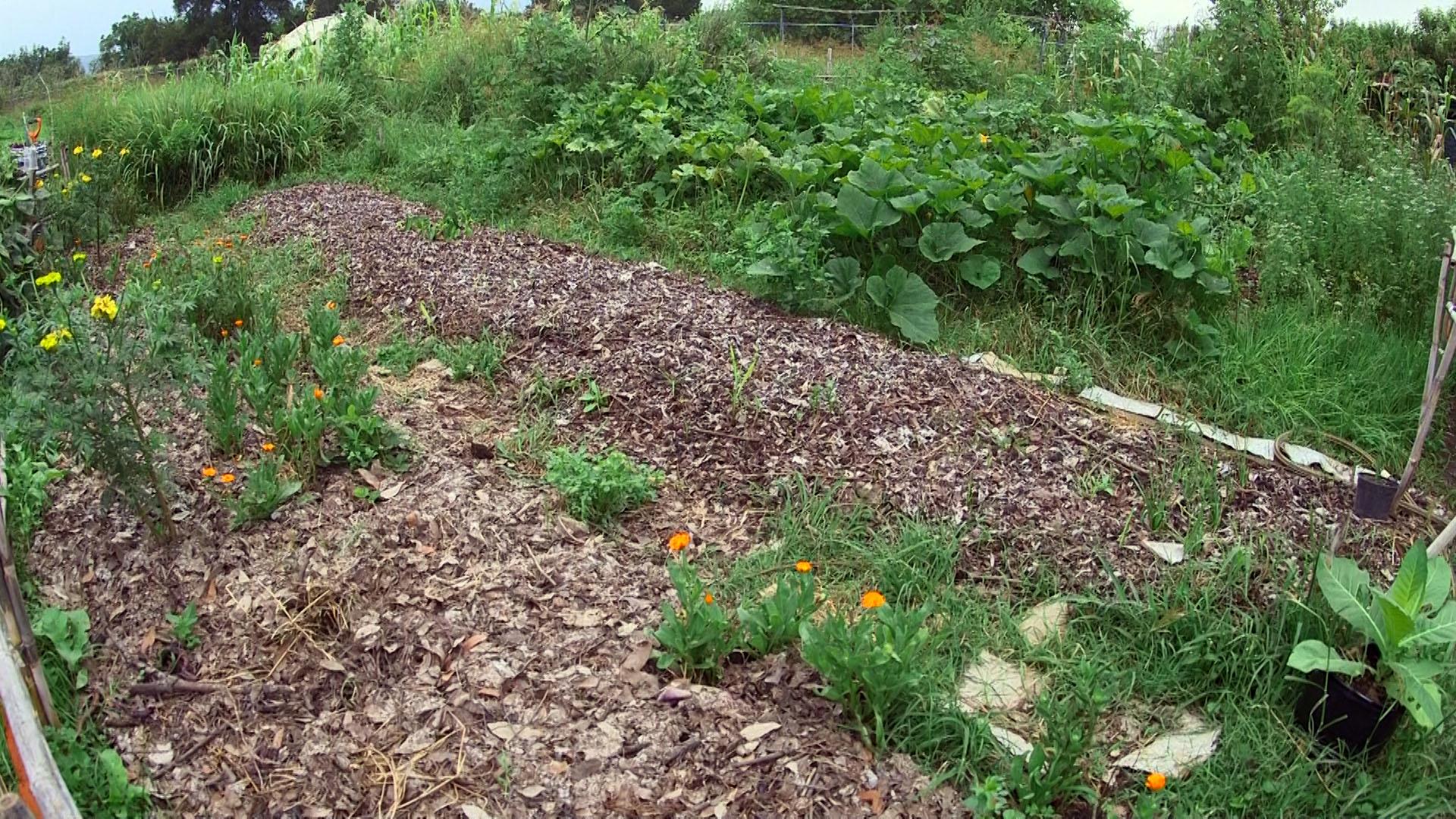 Tierra enriquecida con humus de lombriz y residuos del campo como hojarasca y zacate
