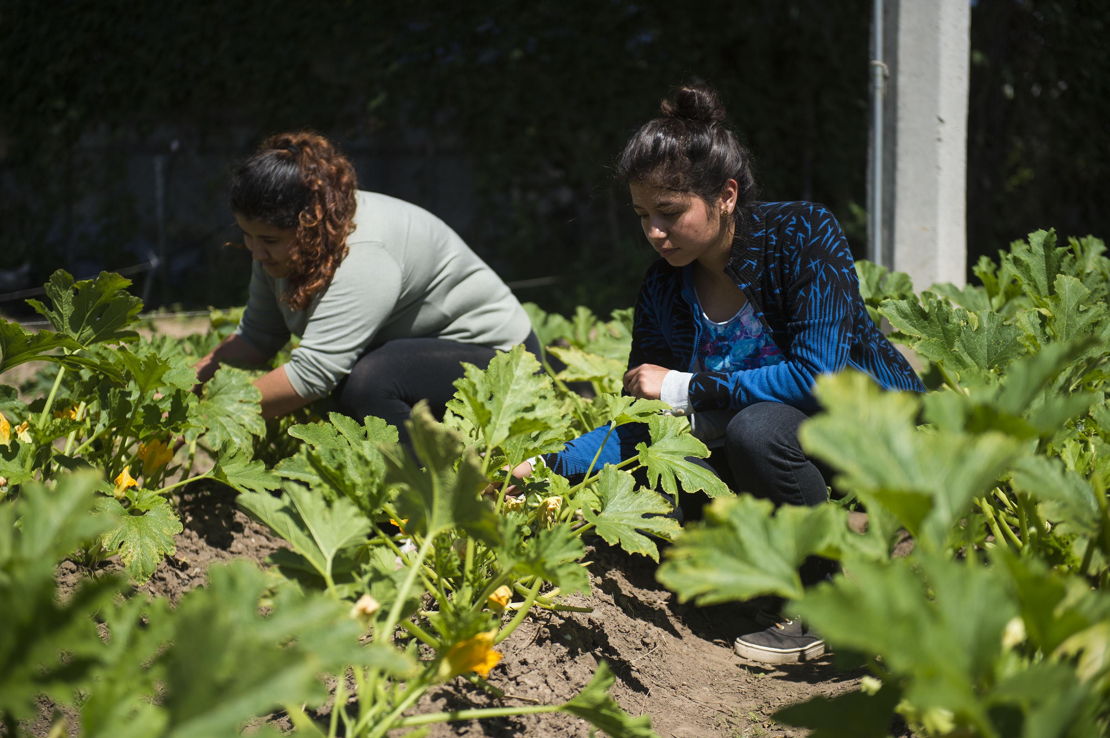 Mujeres trabajando en un invernadero