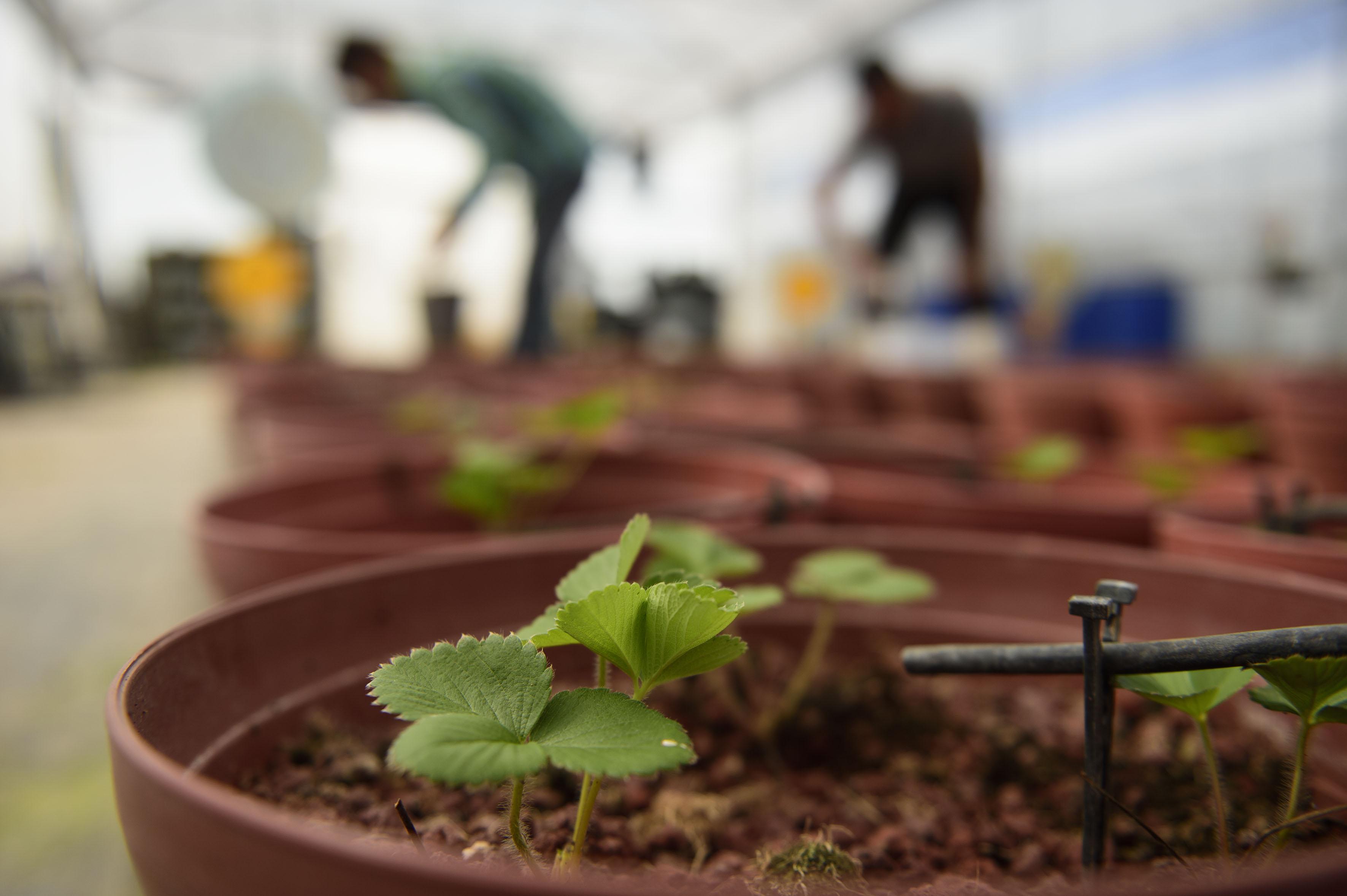 Plantas de invernadero