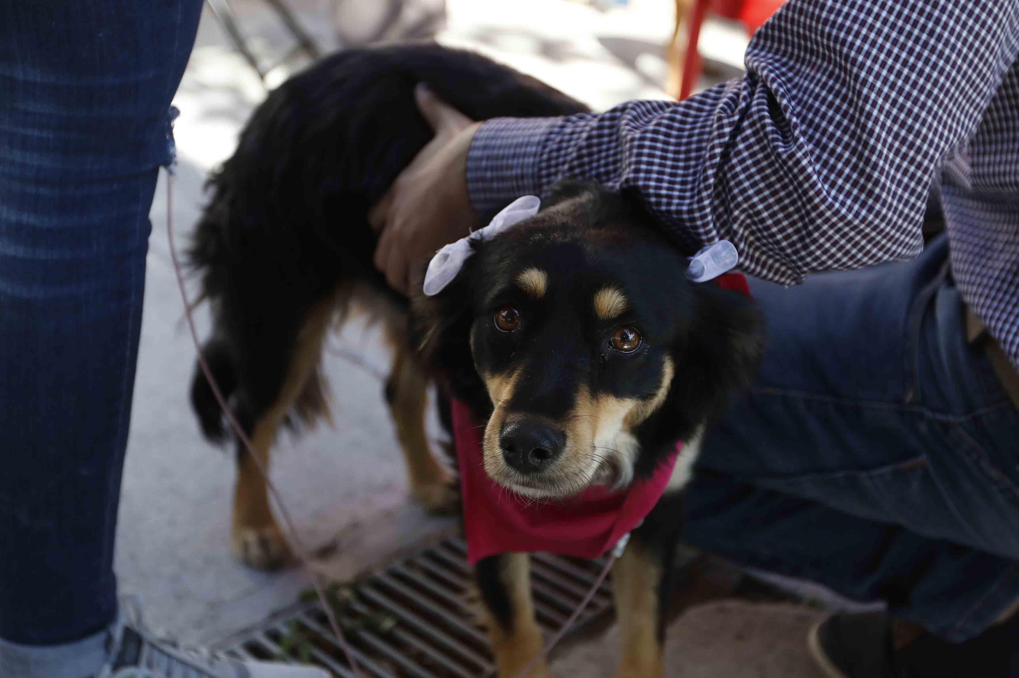 """Persona con un perro participando en el encuentro """"Adopta una mascota"""""""
