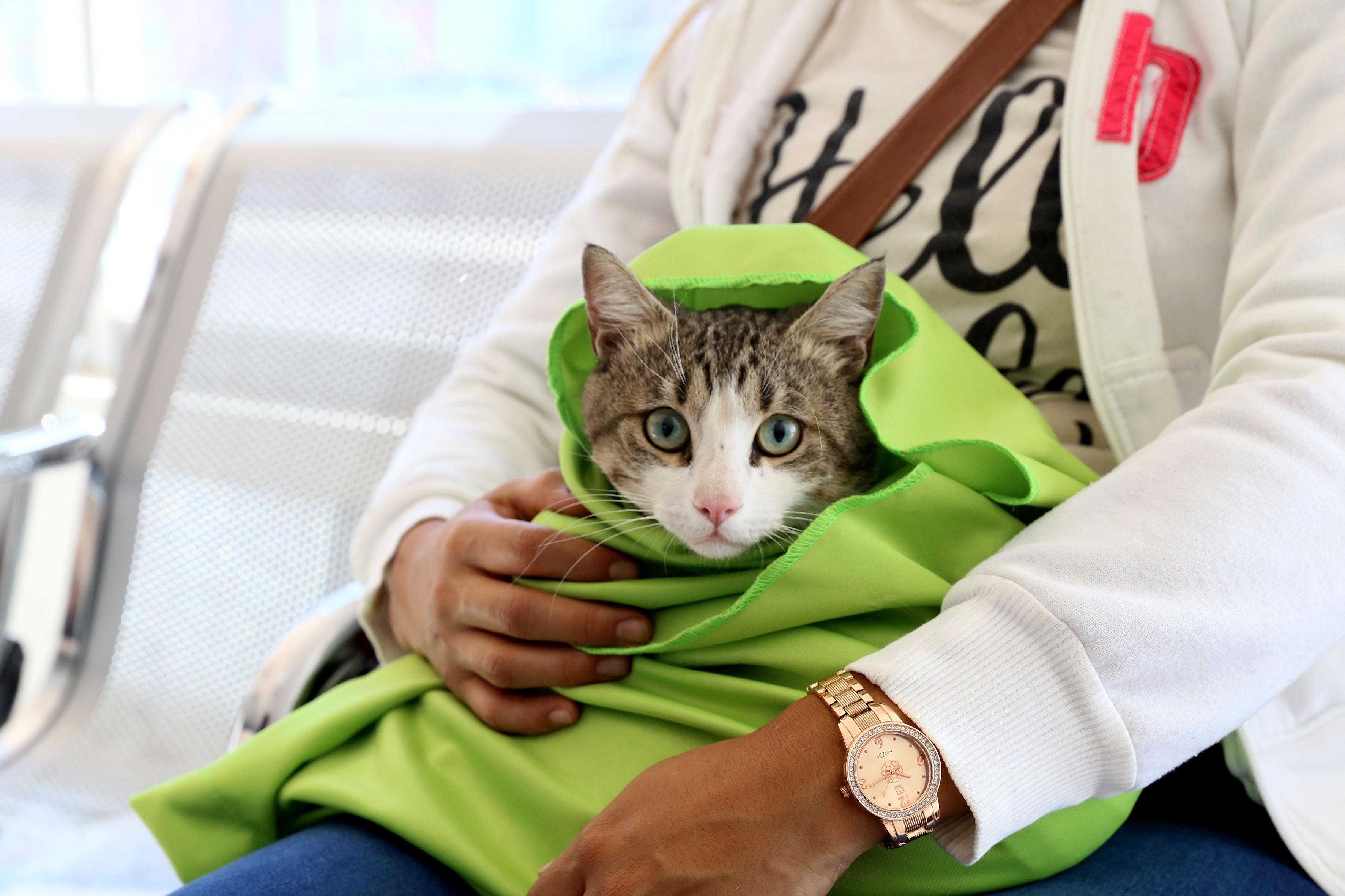Beneficiaria del programa nacional de vacunación antirrabica llevando a su gato