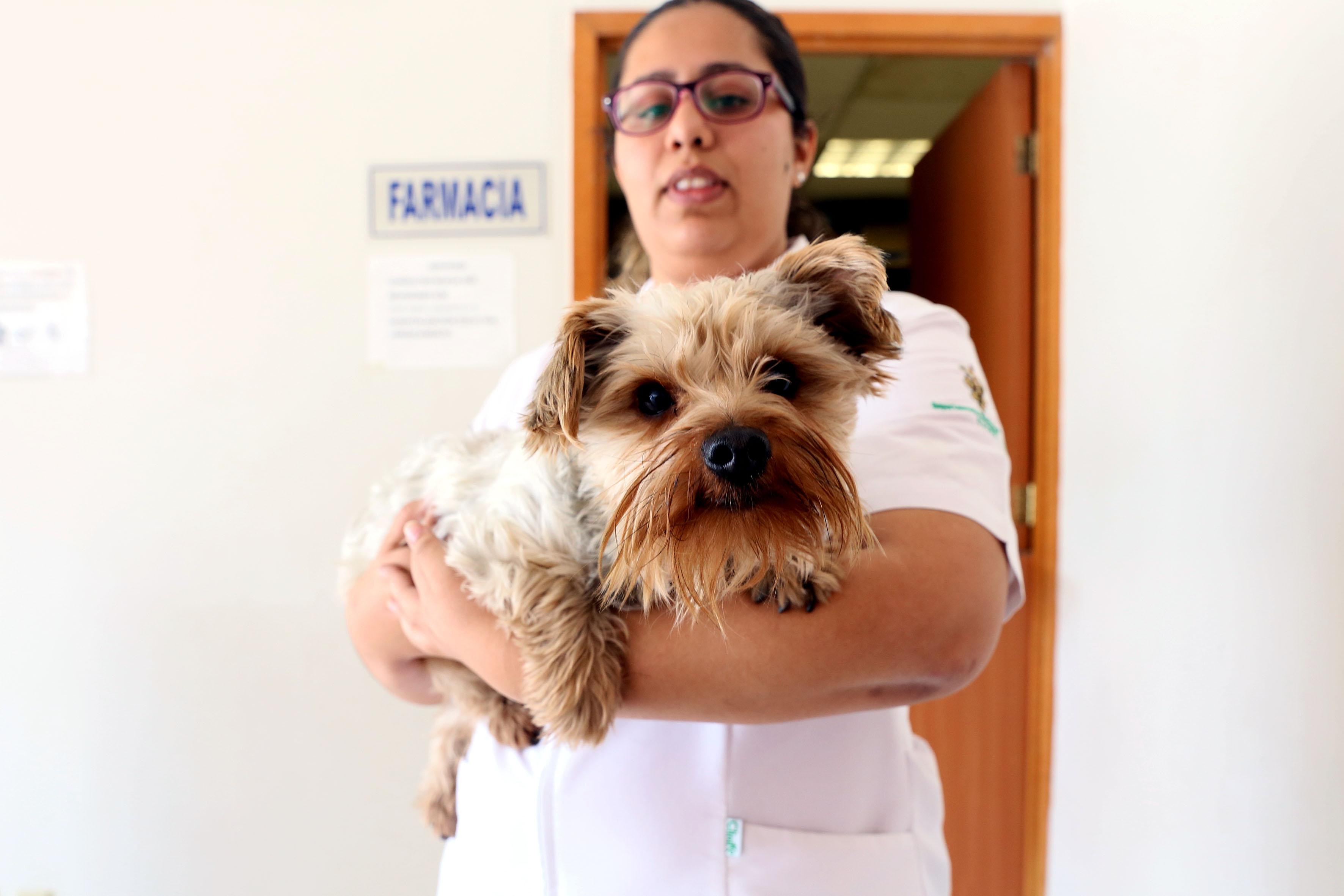 Veterinaria cargando a un perro