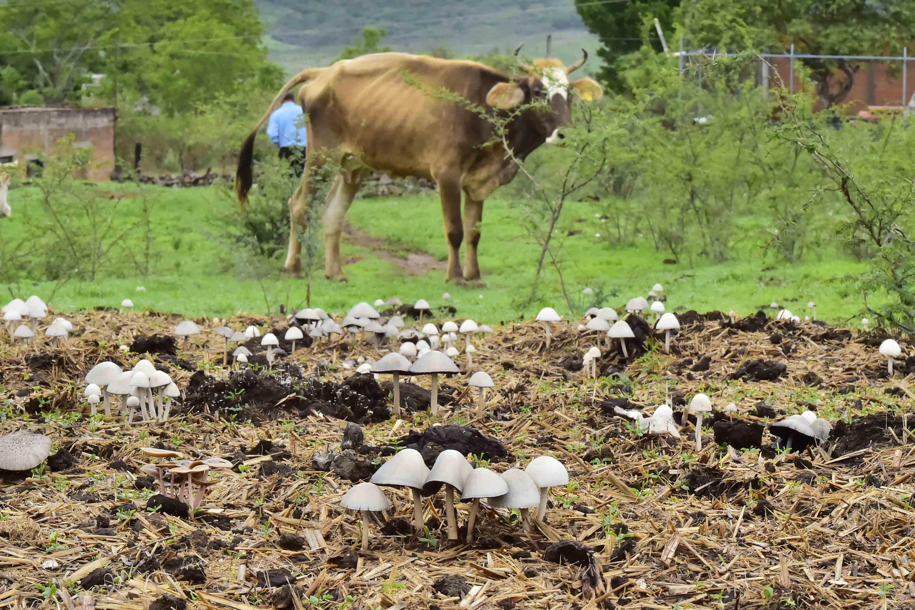 Especies de hongos, provenientes de la región Sierra Occidental.