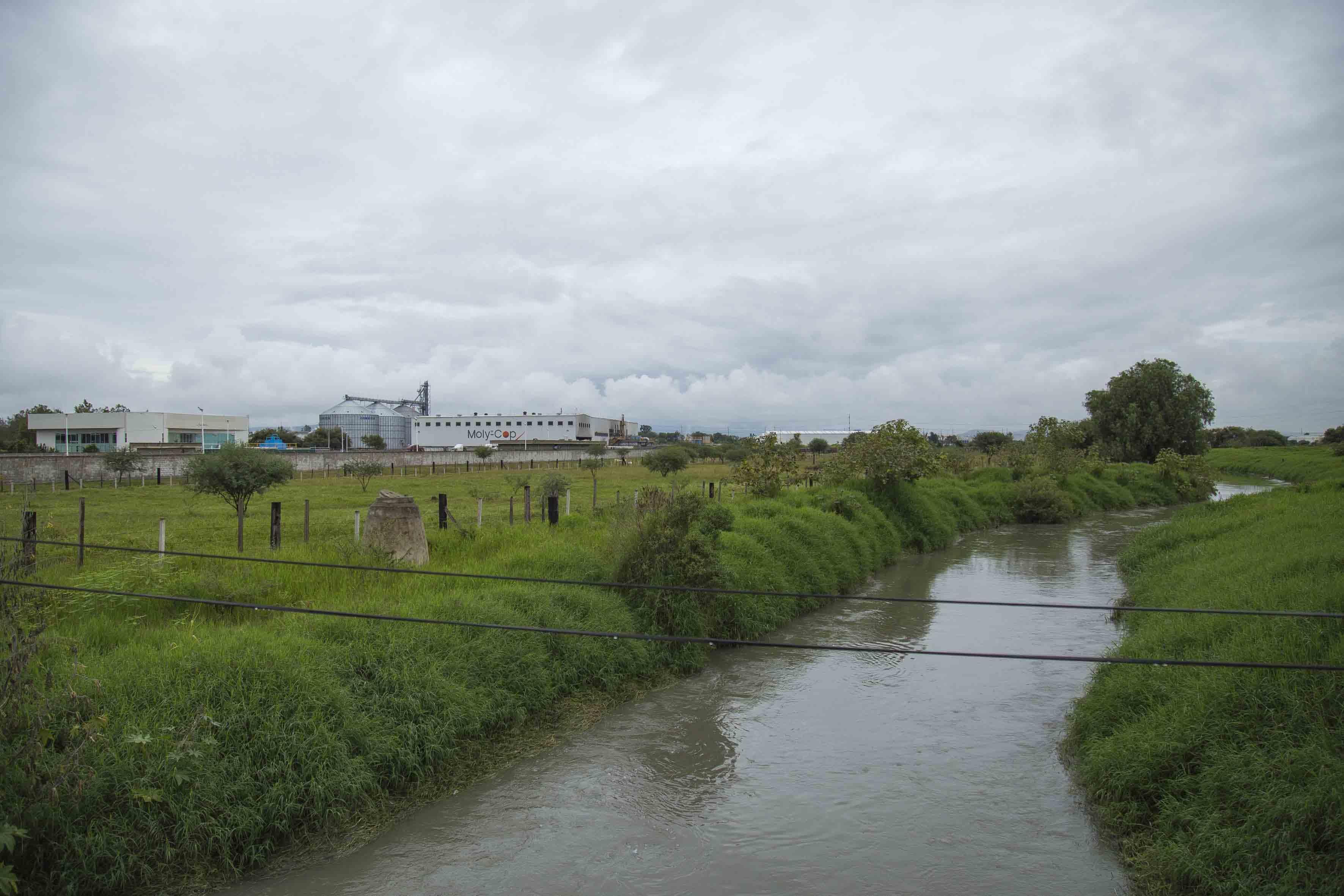 Paisaje donde se observa una industria residente en el Salto y ganado bovino.