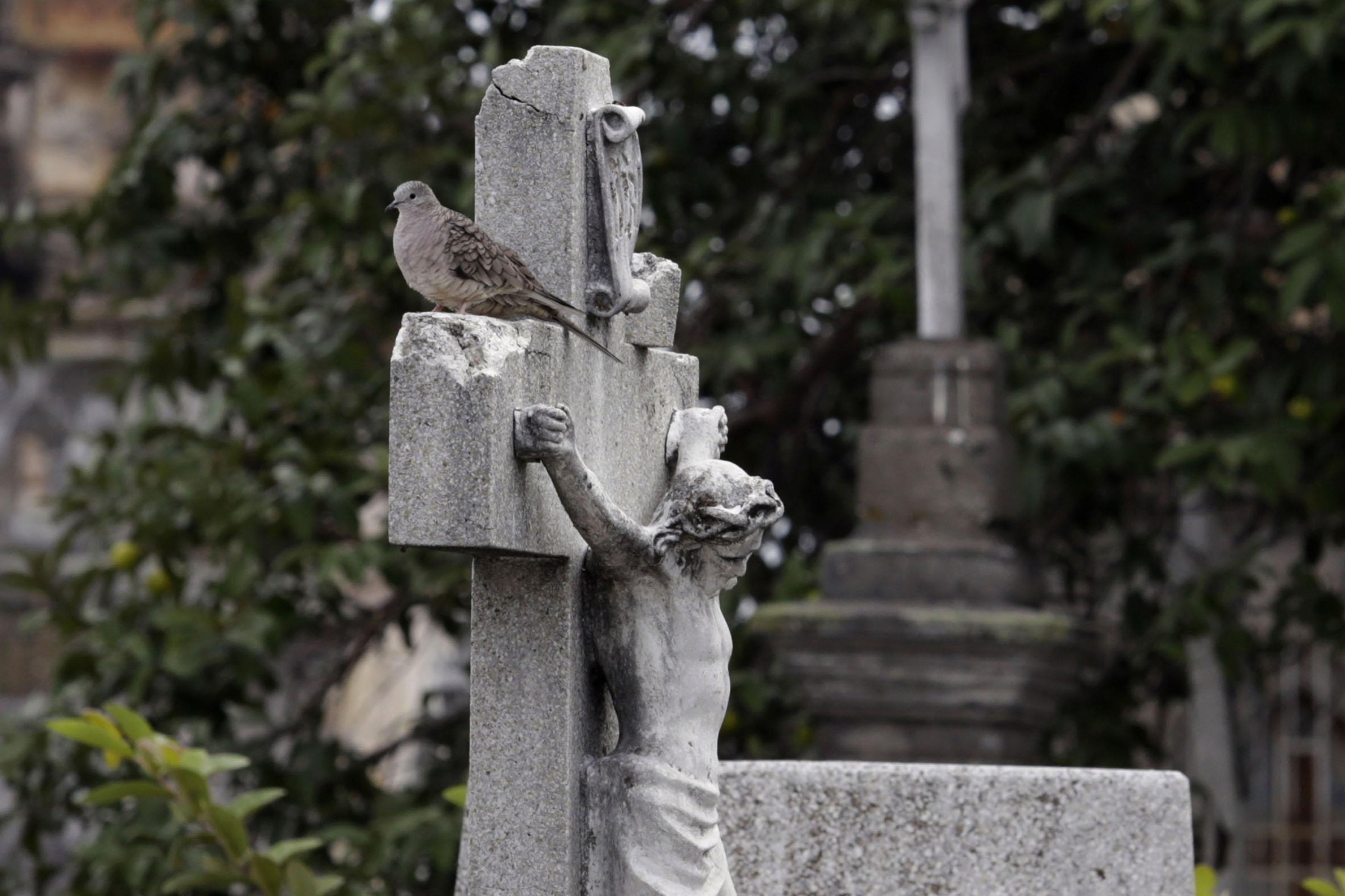 Especie de tórtola, parada en la lápida de una tumba.