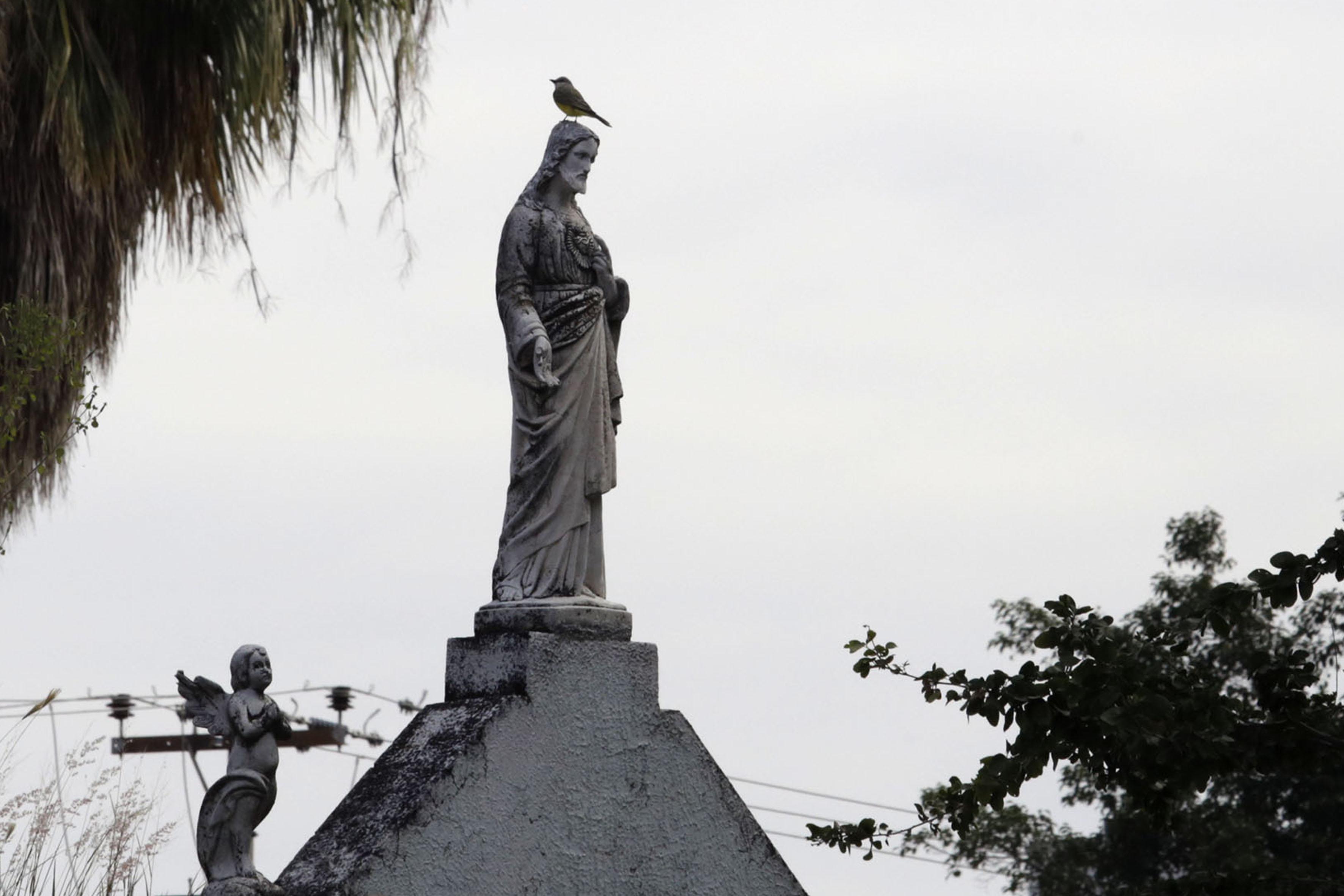 Gorrión Común, especie de ave parada en la imagen católica de una tumba.