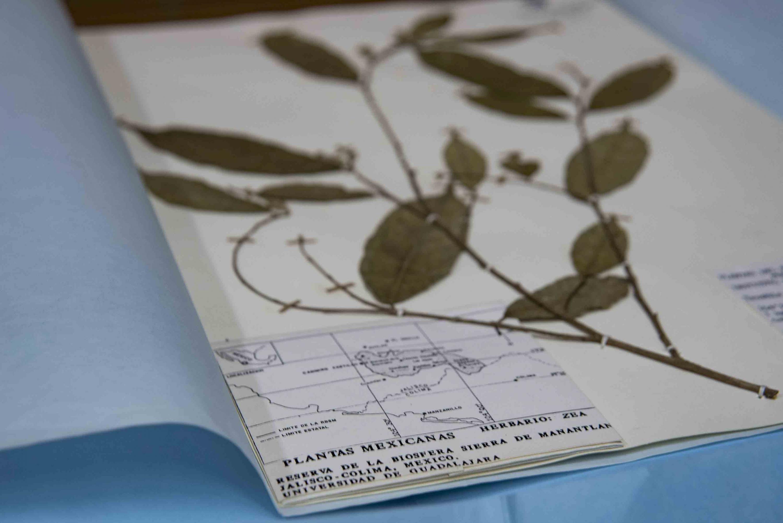 Muestras del herbario