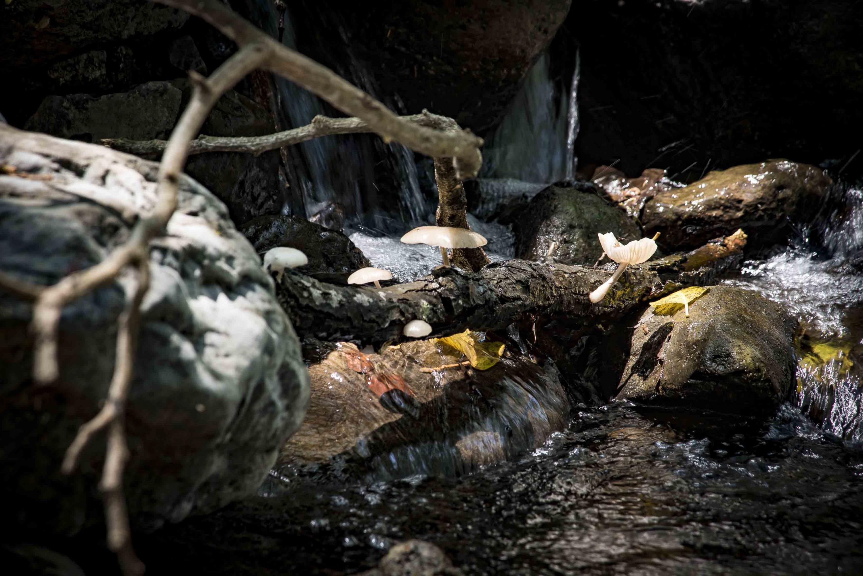 Hongos creciendo en un tronco, cerca del riachuelo del Charco de las truchas en Ahuacapán
