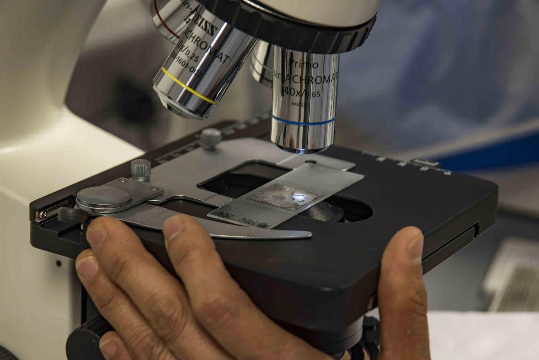 Investigador analizando una muestra de las plantas que existieron hace miles o cientos de años, con un microscopio.