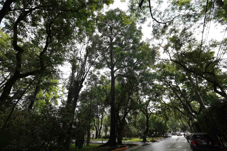 Avenida de Guadalajara con grandes arboles a los lados