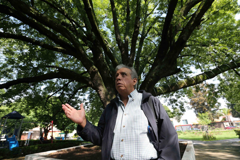El maestro Chávez Anaya es entrevistado con un enorme arbol a sus espaldas