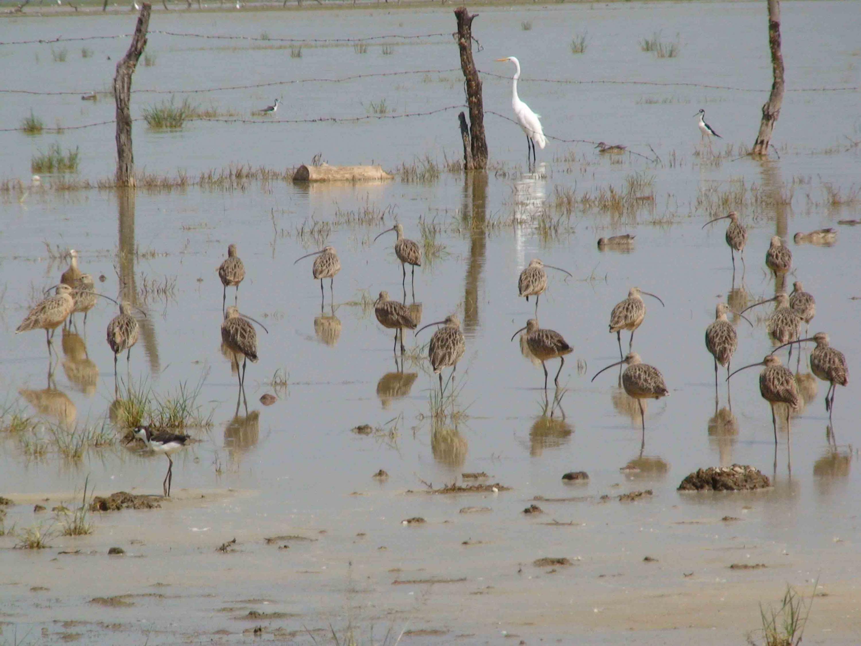 Distintos tipos aves posando y caminando por la Laguna de Sayula.