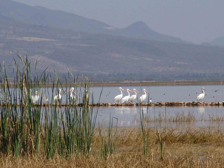 Variedad de tipos de aves, posando y volando sobre la Laguna de Sayula.