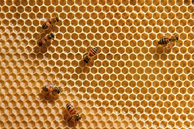 Grupo de abejas en una colmena