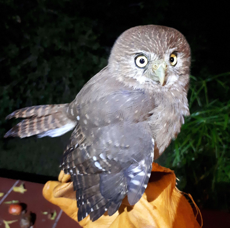 Fauna en la Costa Sur de Jalisco