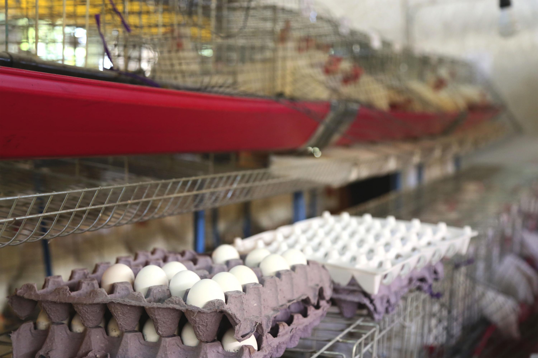 Estante con huevos de gallina en supermercado