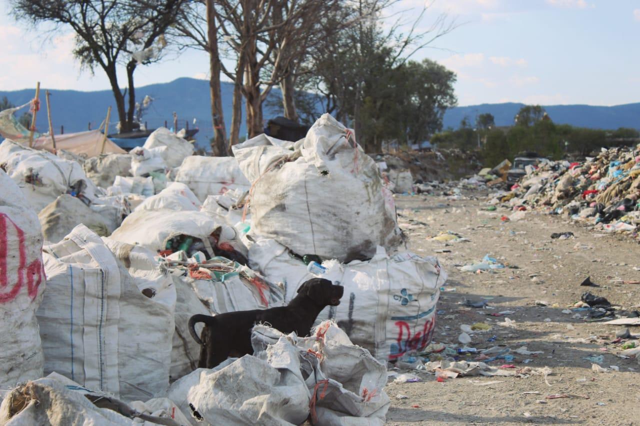 """Crista Mizrahym Arredondo Casillas obtuvo mención especial con """"El albergue final de tus residuos"""", inmersión sonora sobre quienes recolectan basura en Jalisco"""