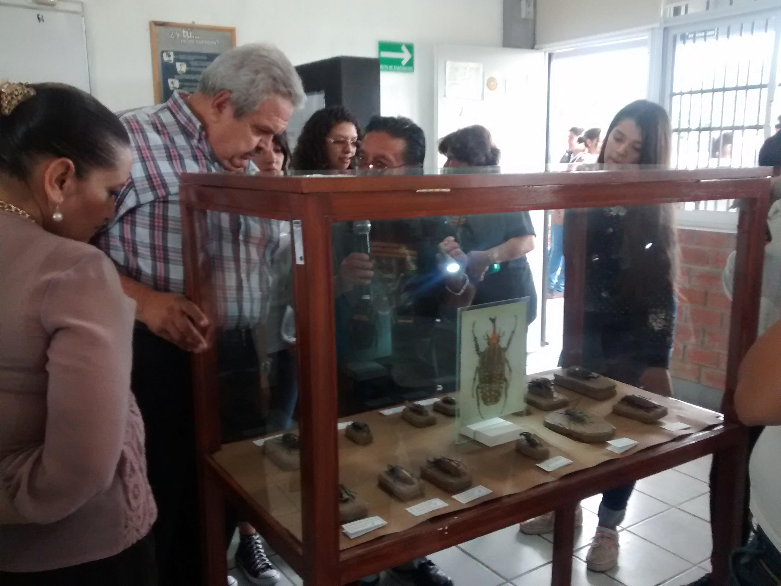 Vitrina con diferentes escarabajos de México