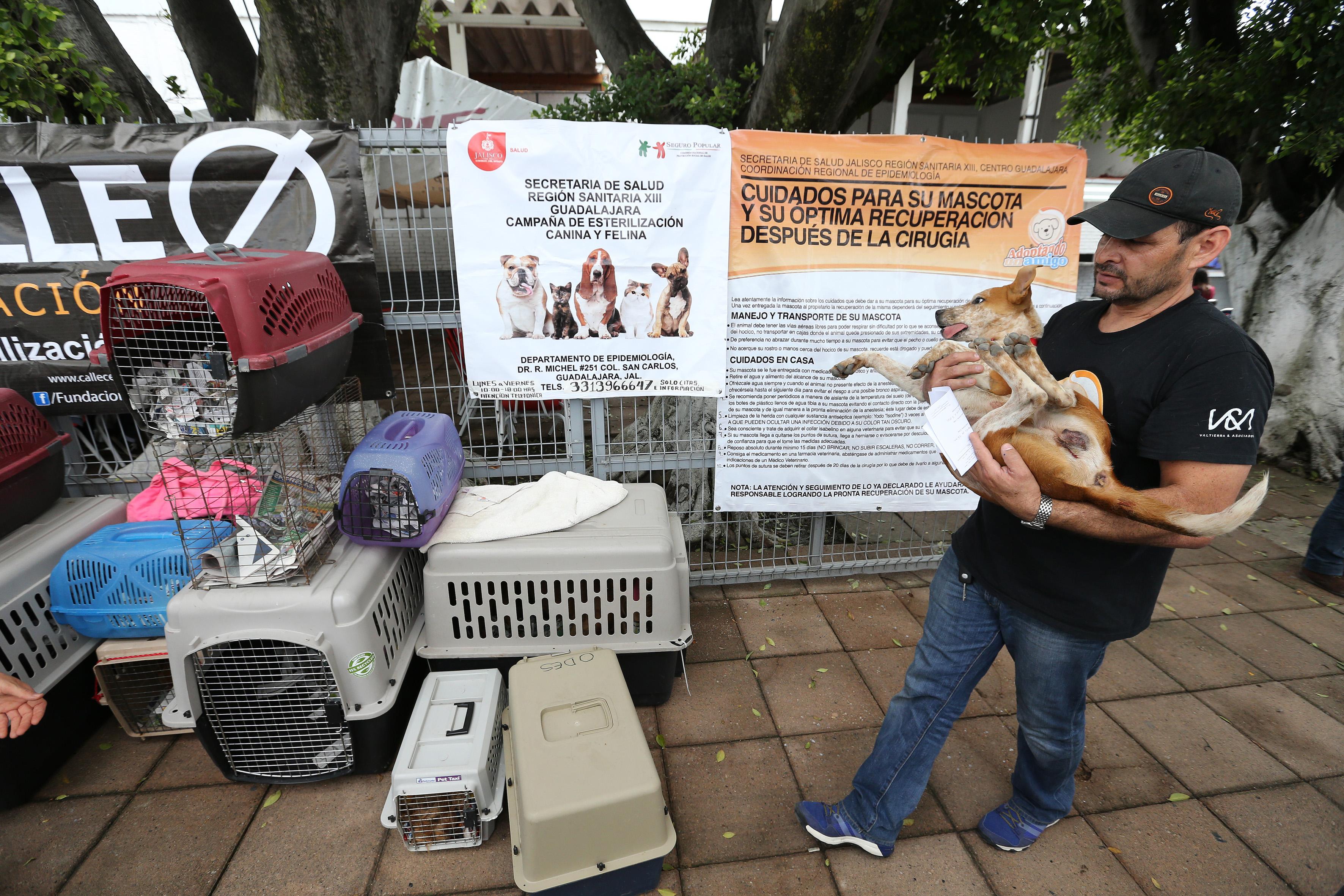 Hombre cargando a su perro después ser sido esterilizado
