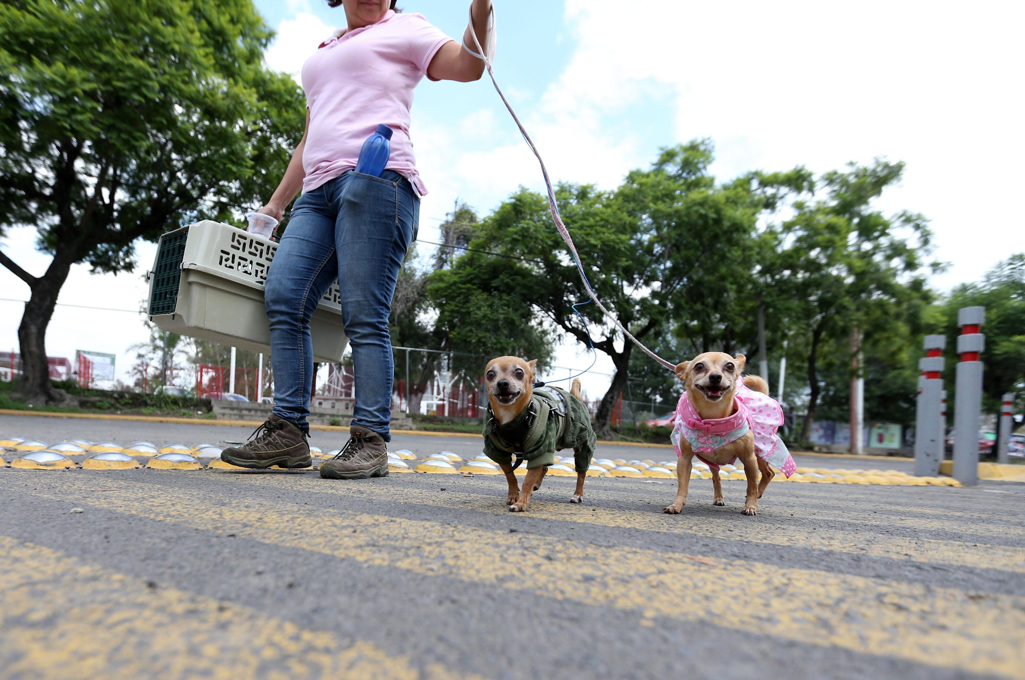 Mujer paseando  a sus perro