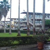 Patio de CUCEA en donde se aprecian arbustos verdes y palmeras de gran tamaño, al fondo se puede ver un edificio