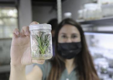 Con ayuda de nitrógeno líquido, investigadores del CUCBA trabajan en desarrollar protocolos que permitan la conservación de material celular de plantas
