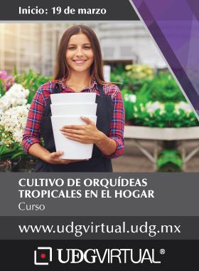 Cartel informativo del Curso de cultivo de orquídeas tropicales en el hogar. Invitan UDGVIRTUAL, fecha de inicio 19 de marzo. Consulte más detalles.
