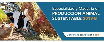 Cartel informativo de la Especialidad y Maestría en Producción Animal Sustentable 2019B. Periodo de registro: Del 4 de junio al 3 de julio. Inicio de cursos: 12 de agosto. Invitan CUCBA